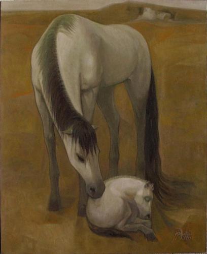 Birth on an Arabian Foal